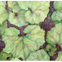 """Leaves""  by Cindy Sacks - Watercolor"