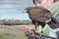 """Harris' Hawk & Handler"""