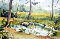 """O'Brien's Nursery Pond"""