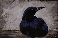 "Award for Pastel, ""Crow"", Cheryl L. Moore, pastel"