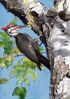 Kent Art Association Award for Watercolor – Steve Hamlin – Pileated Woodpecker
